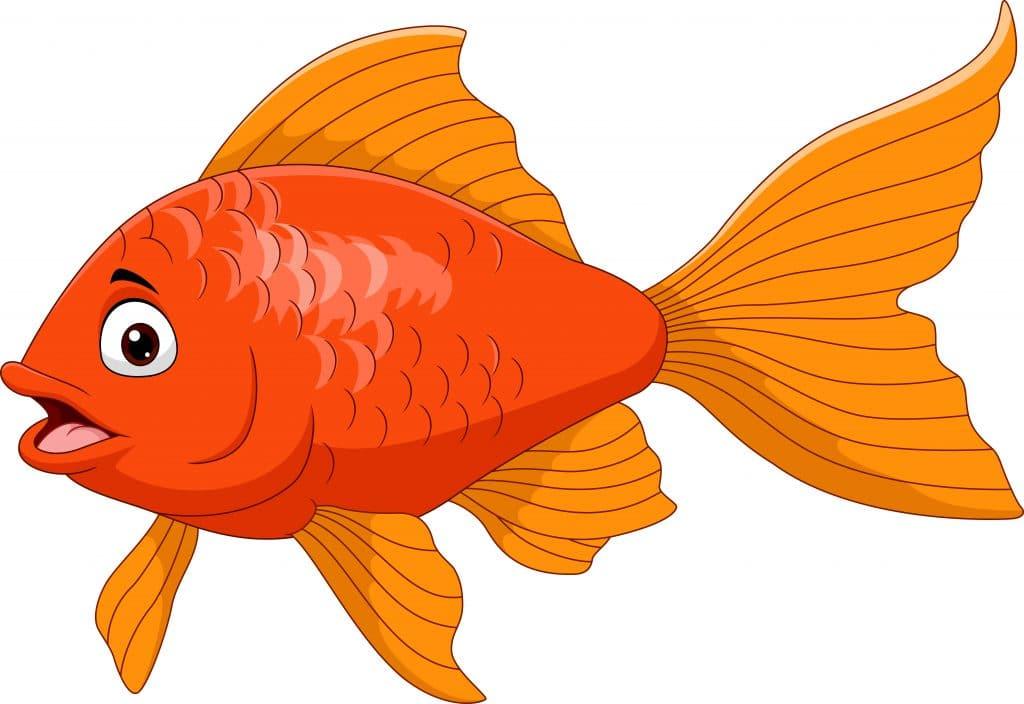 Kırmızı Balık Çocuk Şarkısı ve Sözleri