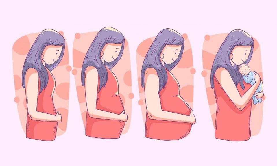 hafta hafta hamilelik hesaplama